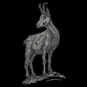 Weisse Gams Ötscher Spirits Bio Zirbe Zeichnung